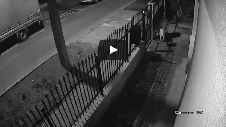 Ezt tették a békés házőrzővel az utcán sétáló suhancok (video)
