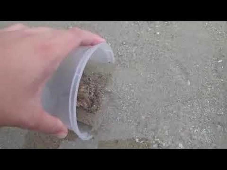 Egy férfi megmentett egy polipot a kiszáradástól. Miután visszatette a vízbe nem akart hinni a szemének, mit csinált a polip.