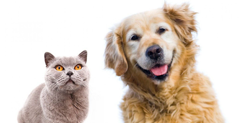 Kutyák és macskák.... Mennyit is tudsz róluk?