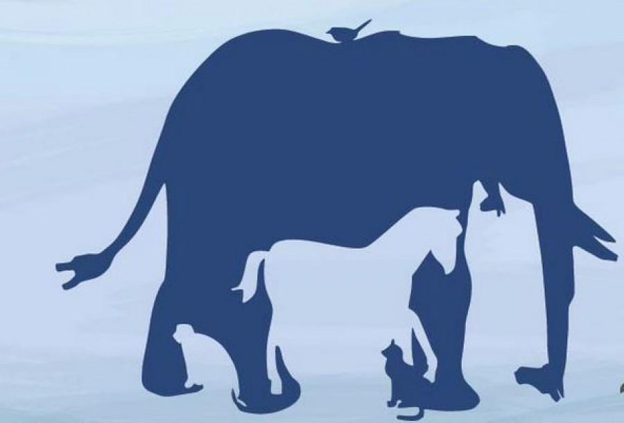Hány állatot találsz meg a képen?