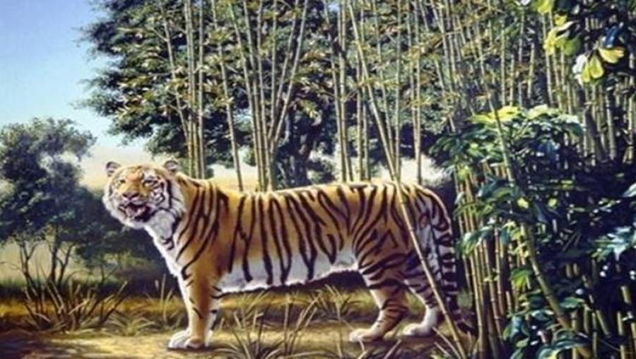 Találd meg a második tigrist a képen!
