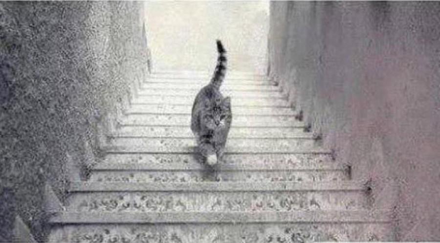 Te el tudod dönteni, felfelé, vagy lefelé megy a cica?