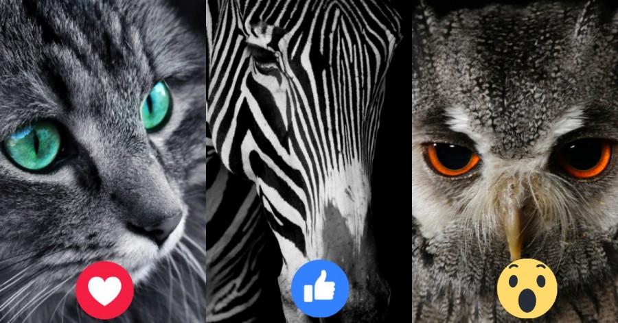 Válassz egy állatot, és tudd meg, hogy mire vágyik a lelked igazán!