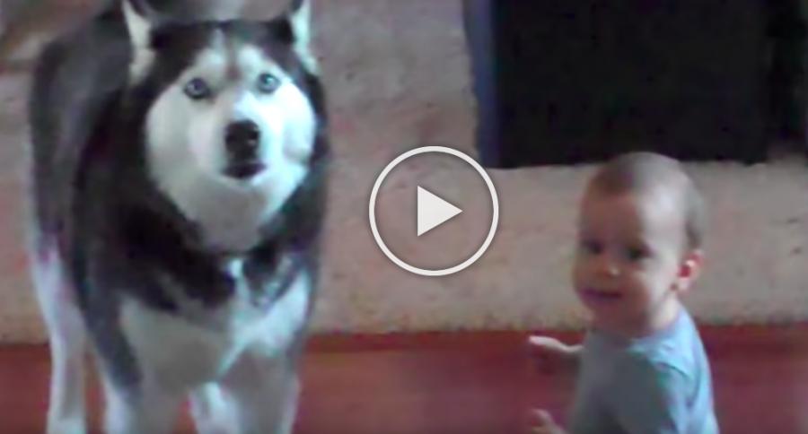 A baba és a kutya utánozzák egymást